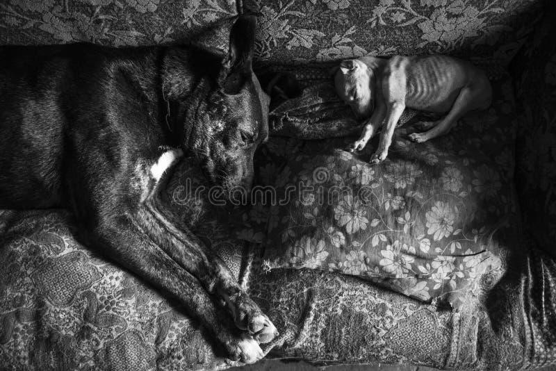 Amores Perros royalty-vrije stock foto's