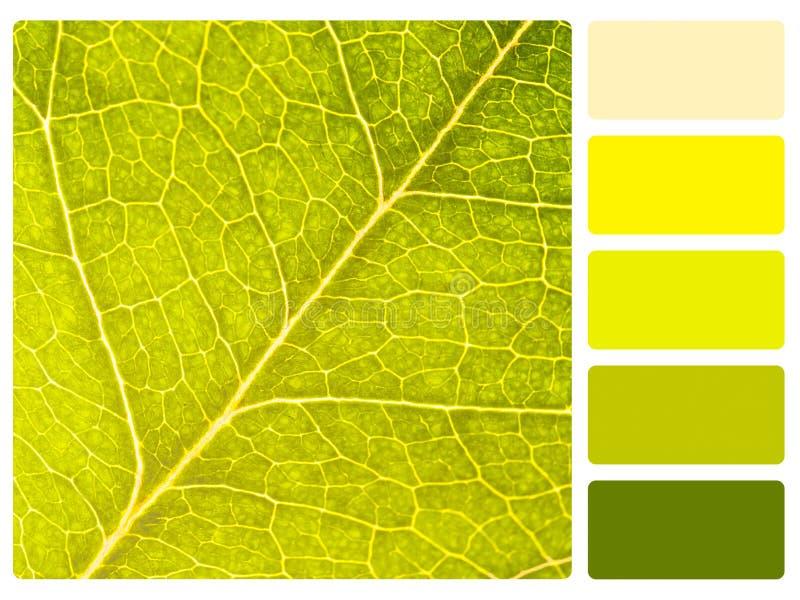 Amostra de folha da paleta de cor. fotos de stock royalty free