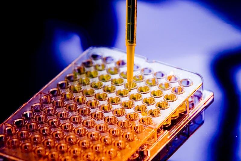 Amostra médica Tray Pipette Testing Laboratory do hospital imagem de stock royalty free