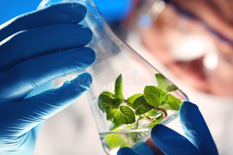 Biotecnologia imagem de stock royalty free