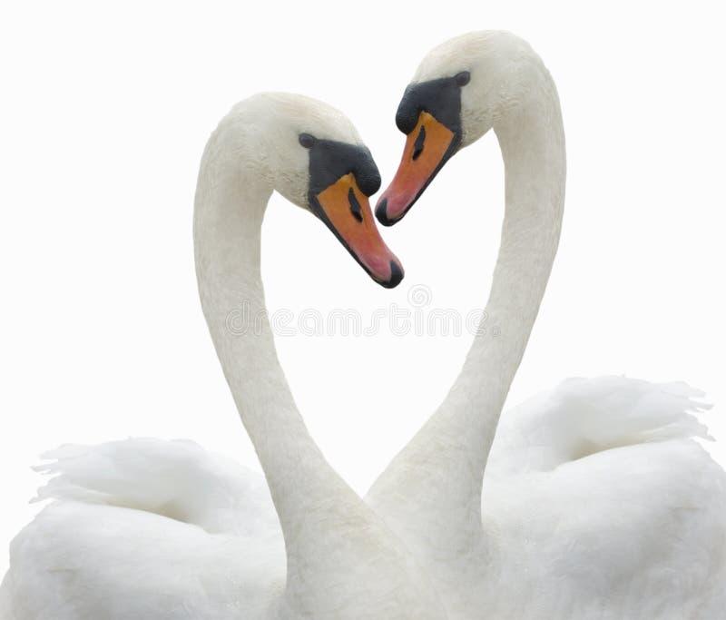 Amour. images libres de droits