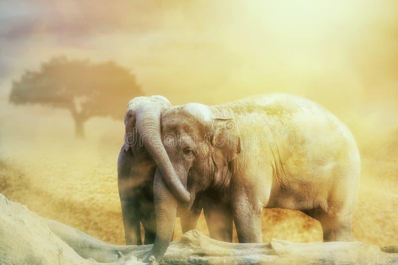 Amour d'éléphant dans la tempête de sable sur le désert photo libre de droits