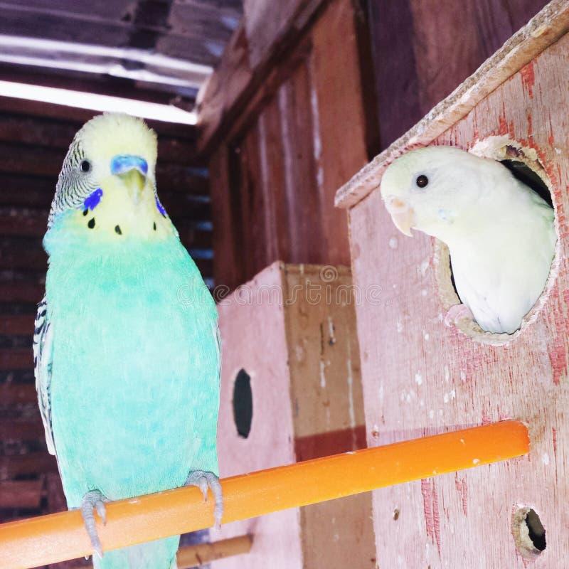 Amour d'oiseau photo stock