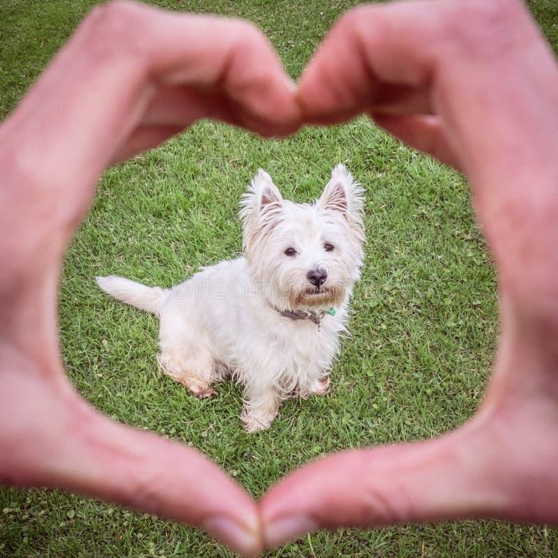 Amour Dun Bon Chien Les Mains Faisant Le Coeur Forment