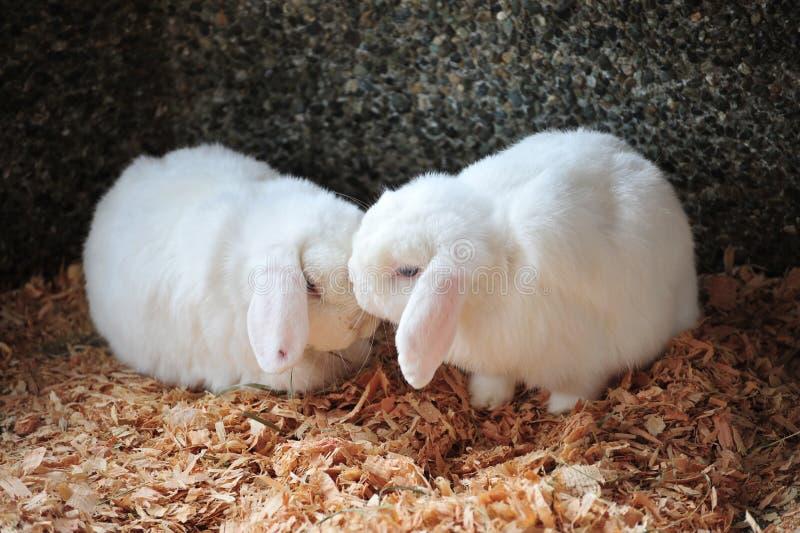 amour de baiser images libres de droits