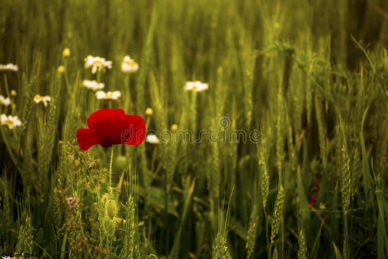 Amour de nature photo stock