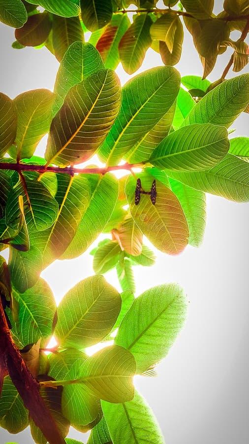Amour de papillon photos stock