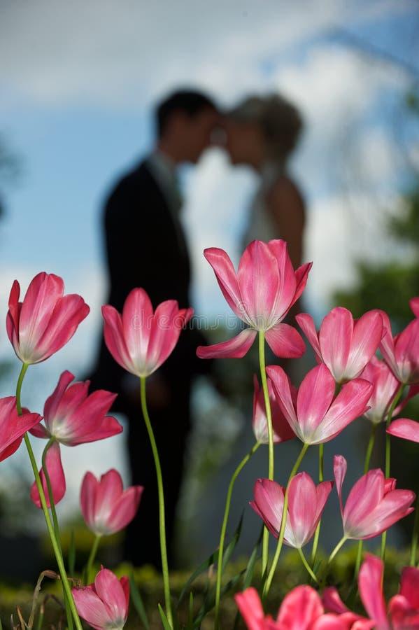 Amour de tulipe photographie stock