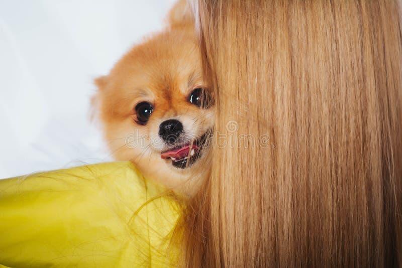 Amour des chiens La belle jeune femme tient un chiot sur ses mains Une fille tient un chien Jour national du ` s d'animal familie image stock