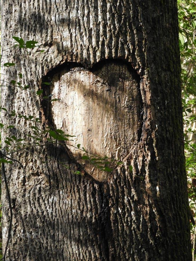 Amour - non fini - tacite - ou trop de courte durée photos libres de droits