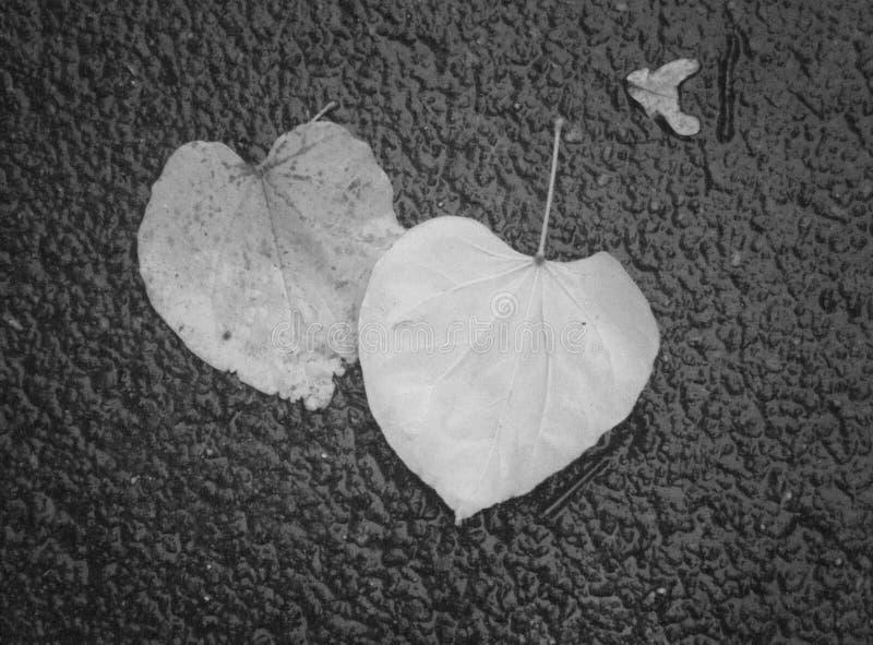 Amour trouvé image libre de droits
