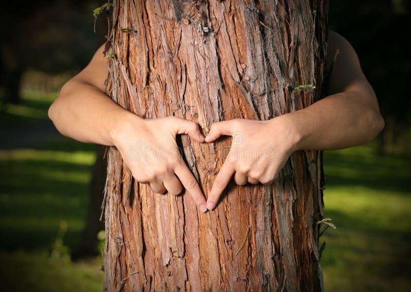 Amoureux d'arbre photos stock