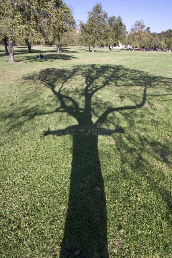 Amoureux d'arbre photographie stock libre de droits