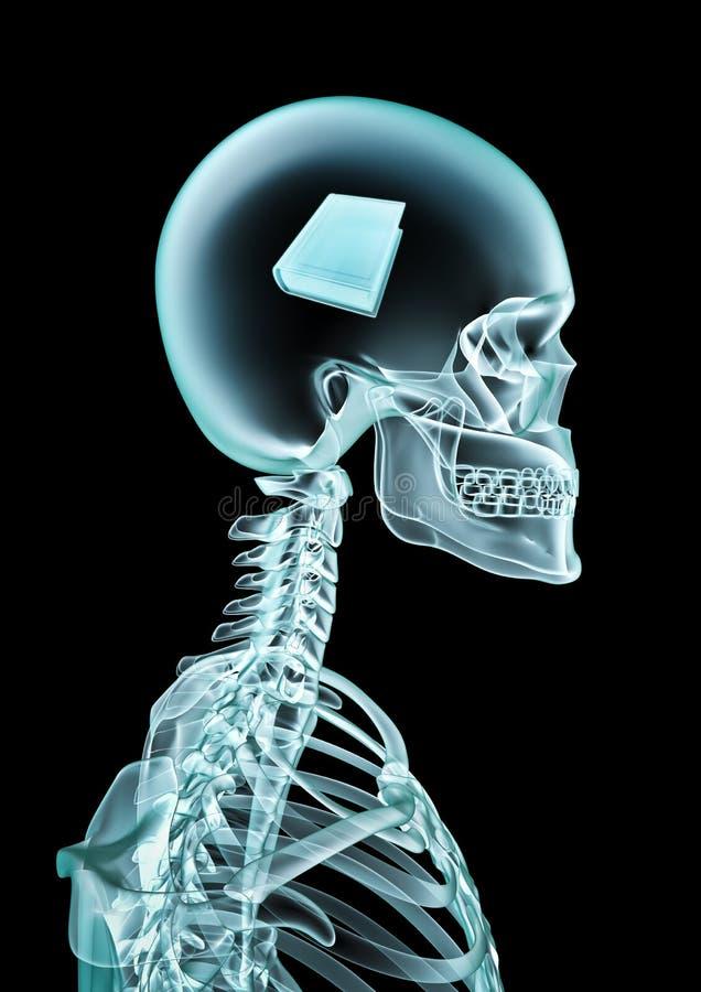 Amoureux des livres de rayon X illustration stock