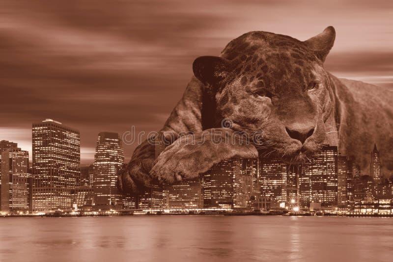 Amours noirs New York City de léopard dans le brun de cru photo libre de droits