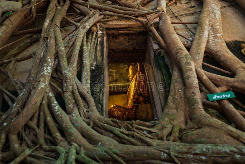 Amphawa, Tailandia - 23 febbraio 2019: Wat Bang Kung, tempio nascosto all'interno delle radici di un albero di banyan Questo temp fotografia stock libera da diritti