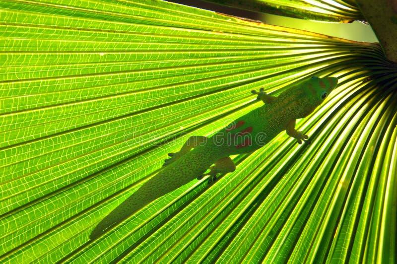 Download Amphibian beneath frond stock image. Image of beautiful - 23030833