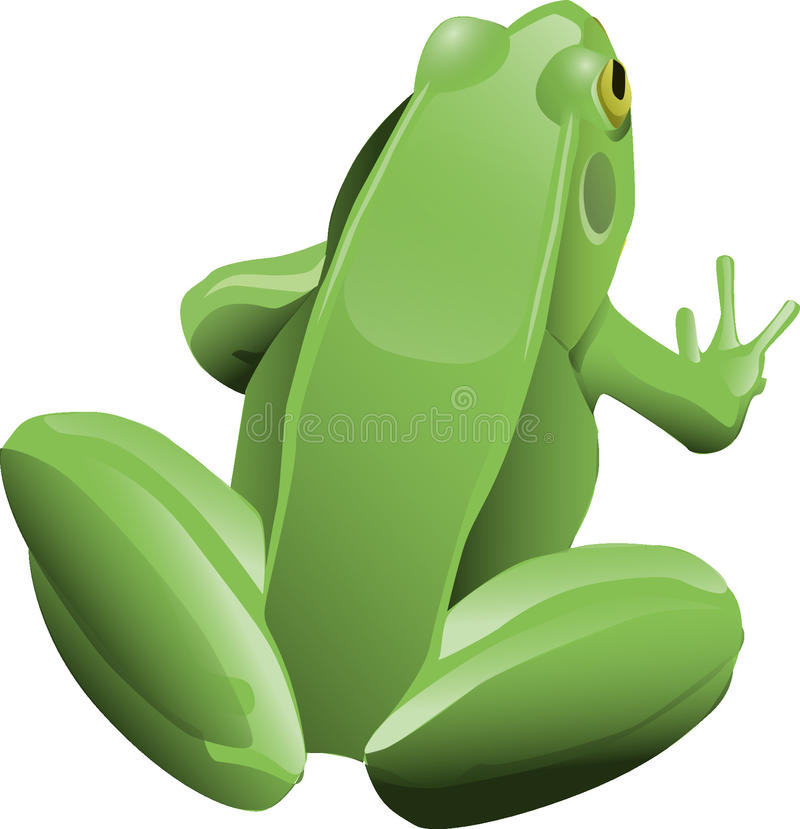 Amphibian, Green, Frog, Tree Frog royalty free stock images