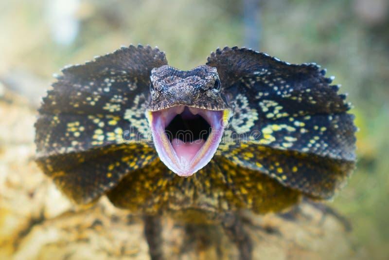 Amphibies, animal, animales, animaux, animalwildlife, longhorn, trapu, insecte, visage, grenouille, vert, macro, mammifères, funy image libre de droits