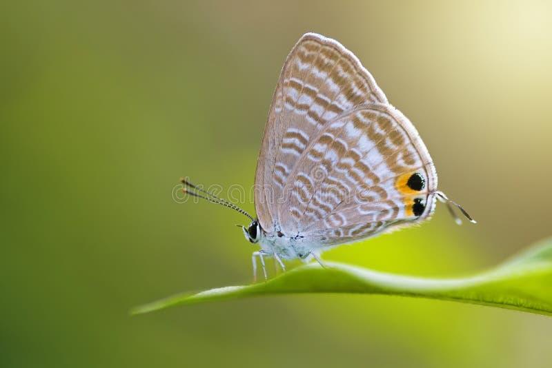 Amphibies, animal, animales, animaux, animalwildlife, papillon, trapu, insecte, visage, grenouille, vert, macro, mammifères, libe photographie stock