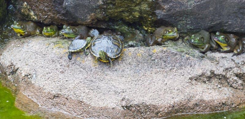 Amphibische Freunde stockbilder