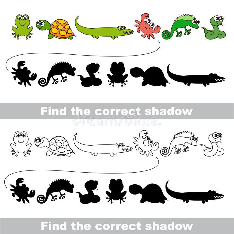 Amphibischer Satz Finden Sie korrekten Schatten stock abbildung