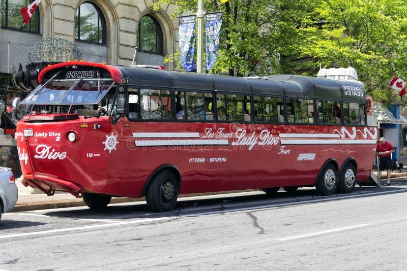 Amphibus lizenzfreie stockfotografie