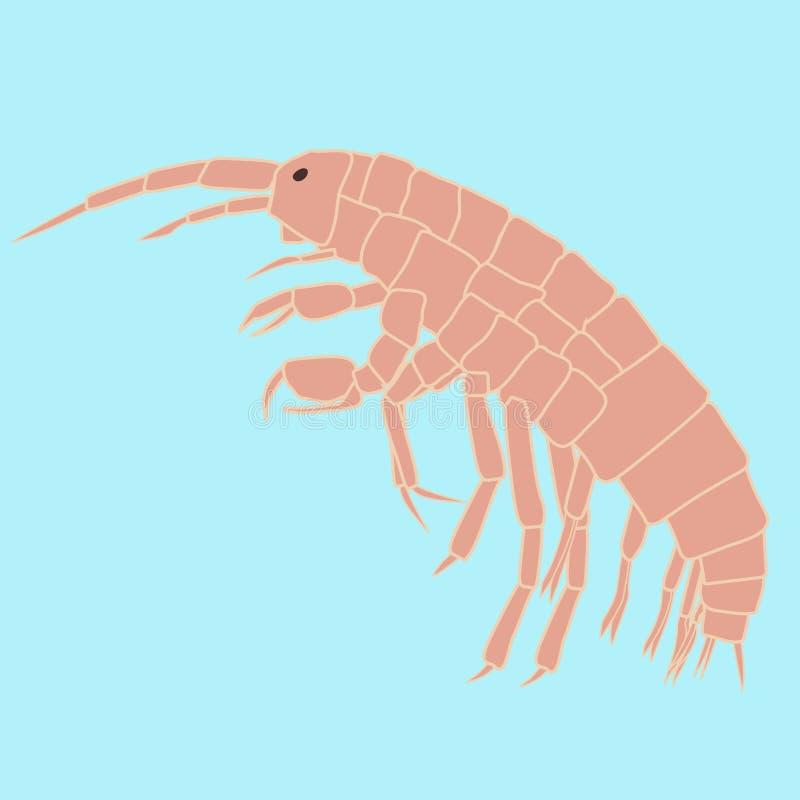 Amphipoda Small Animal, Planktonic Organism Stock Vector ...
