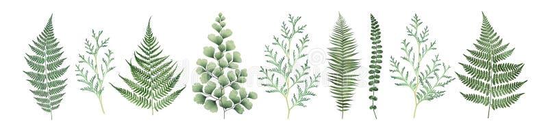 Ampia raccolta degli elementi floreali isolati su fondo bianco Illustrazione botanica dell'acquerello illustrazione vettoriale