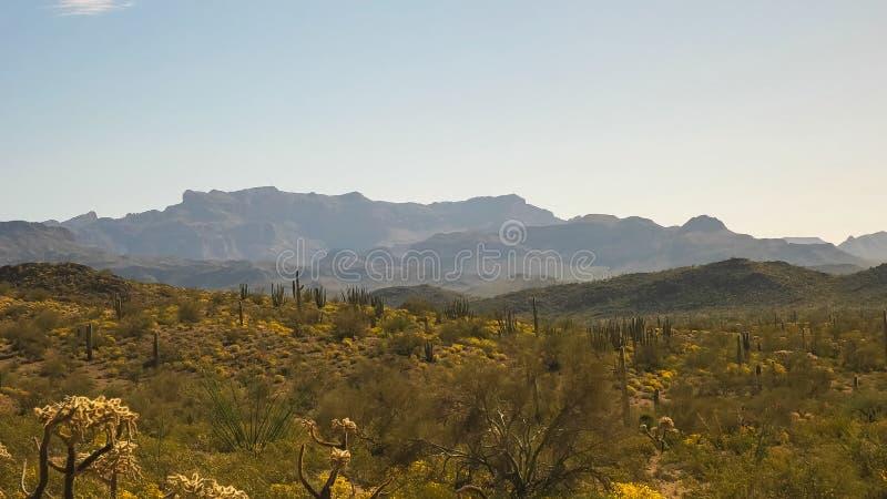 Ampia vista del cactus nel deserto di sonoran in Arizona immagine stock libera da diritti