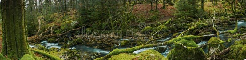 Ampia vista panoramica sul terreno boscoso antico della foresta in Devon, Regno Unito immagine stock