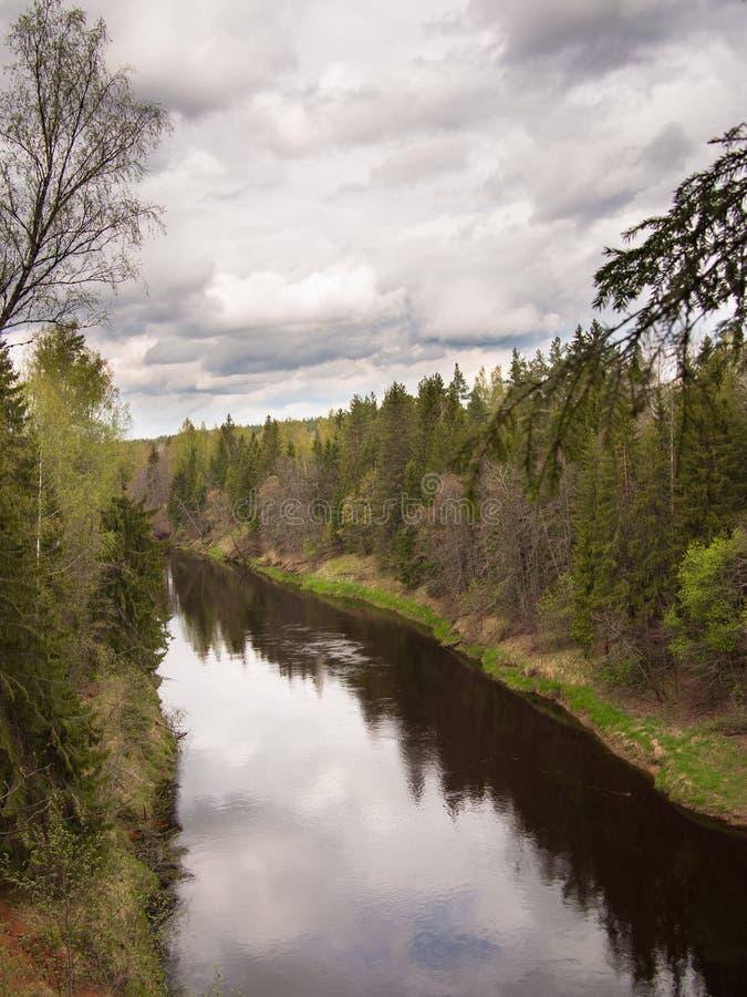 Ampio fiume con l'abetaia fotografie stock