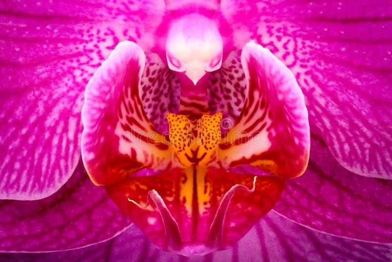 Ampliação extrema - detalhe da orquídea imagens de stock royalty free