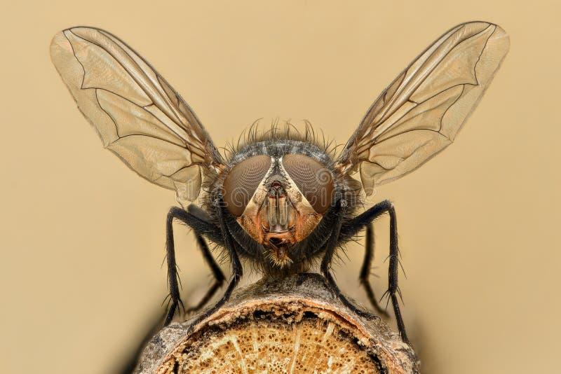 Ampliação extrema - liftoff da mosca imagem de stock royalty free