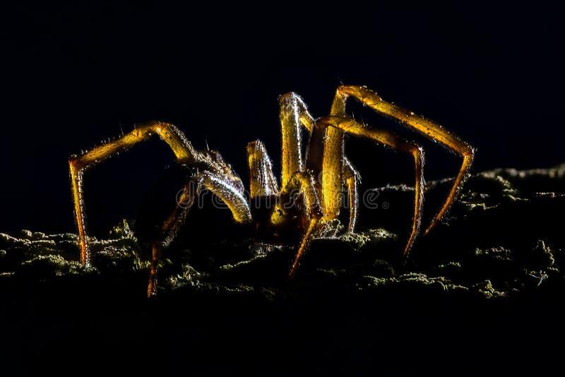 Ampliación extrema - araña espeluznante, hecha excursionismo imagen de archivo