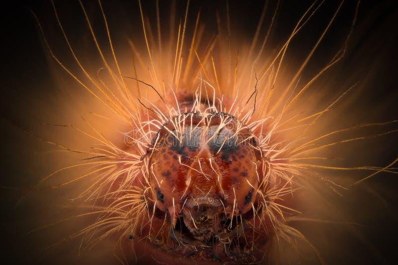 Ampliación extrema - Caterpillar rojo dirige imagenes de archivo