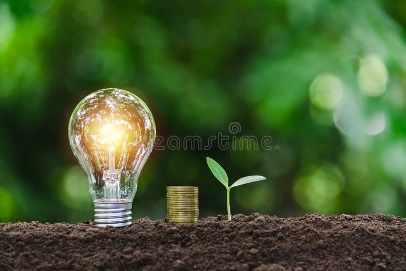 Ampola com moedas e planta nova para o conceito de salvamento do dinheiro, o financeiro, do neg?cio ou da energia posto sobre o s imagem de stock royalty free