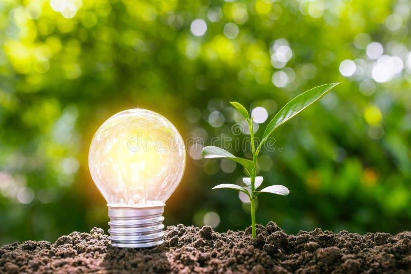 A ampola com a planta nova para o conceito da energia pôs sobre o solo imagem de stock royalty free