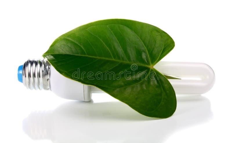 Ampola e folha verde foto de stock royalty free
