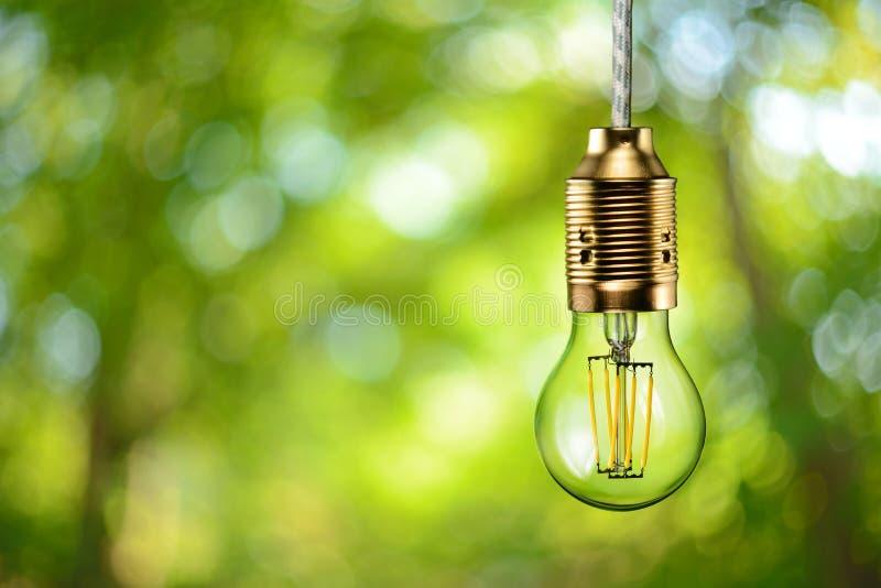 Ampoule écologique de filament de LED images libres de droits