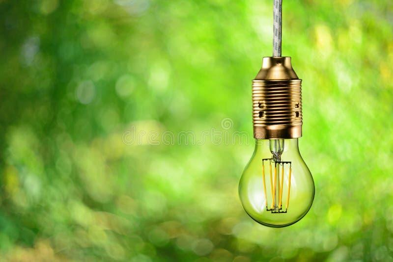 Ampoule écologique de filament de LED photo stock