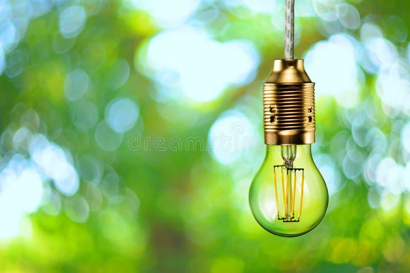Ampoule écologique de filament de LED images stock