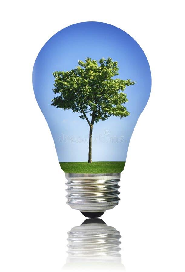 Ampoule avec l'arbre photographie stock