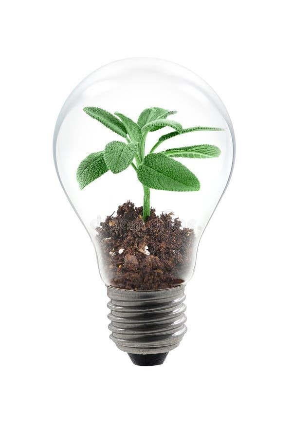 Ampoule de centrale photo libre de droits