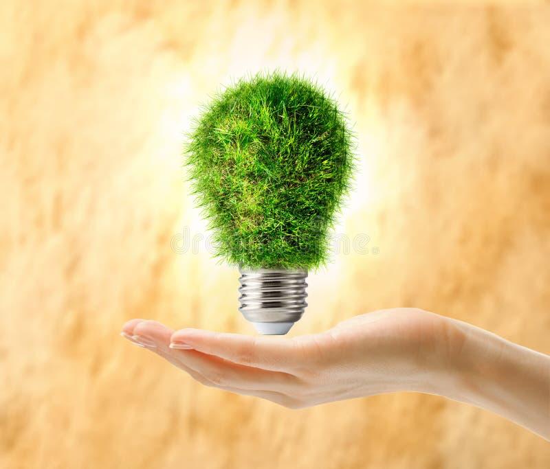 Download Ampoule De Lampe Faite En Herbe Dans La Main Femelle Image stock - Image du matériel, inspiration: 76076565