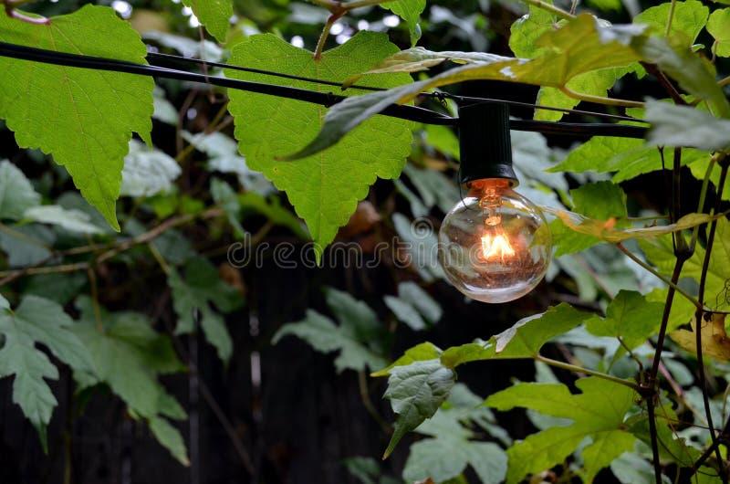 Ampoule parmi des feuilles images stock