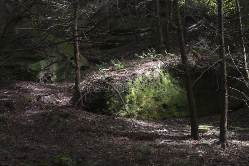 Ampuł skały w lesie z nierównym światłem słonecznym obrazy stock