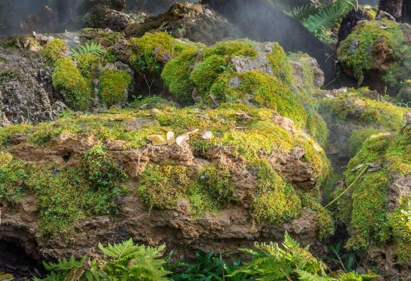 Ampuła kamień zakrywający z zielonym mech zdjęcie royalty free