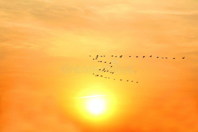 Ampuła kierdel ptaki lata na tle słoneczny świt obraz royalty free