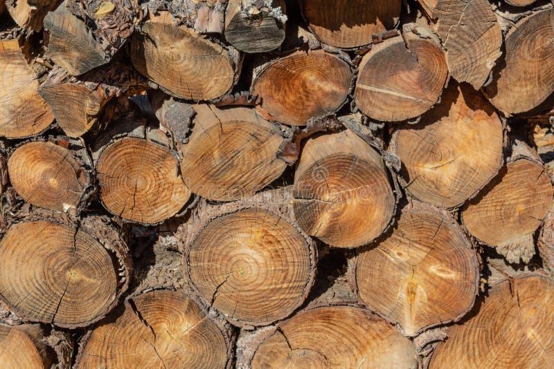 Ampuła stos rżnięte drewniane bele, widok rżnięte końcówki obrazy stock